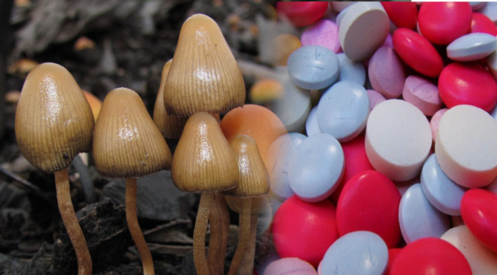 Magic mushrooms antidepressants